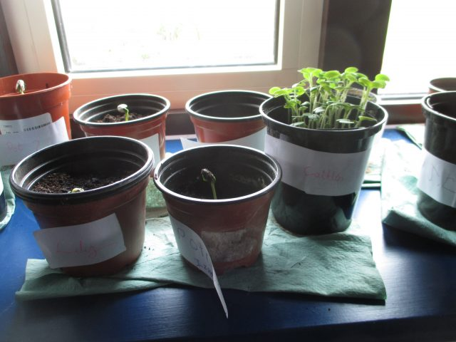 Bright light condition - plants placed on the windowsill